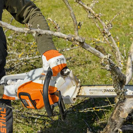 Dārza darbi pavasarī koku izzāģēšana